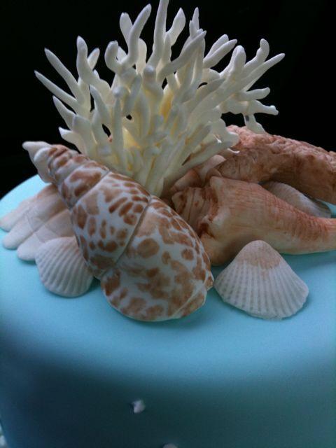 Closeup of seashells
