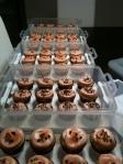 5 dozen vanilla cupcakes